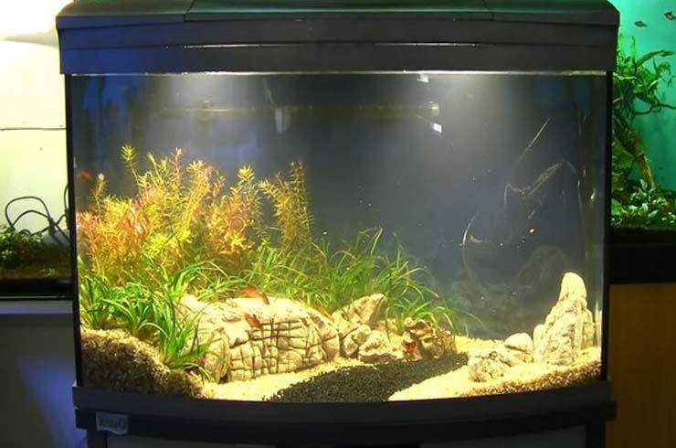 Оформление аквариума закончено