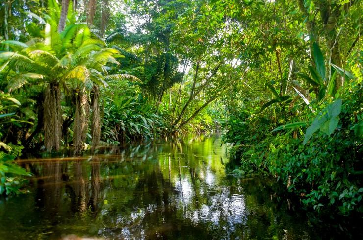 Спокойный приток Амазонки – типичный биотоп для голубого неона