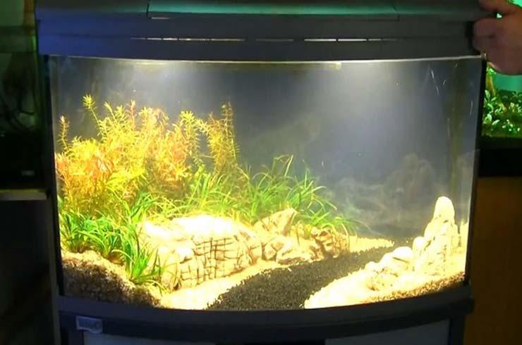В свежем аквариуме вода немного мутная, но это временное явление