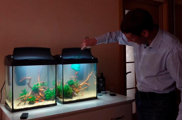 Заселяем меченосцев в новые аквариумы
