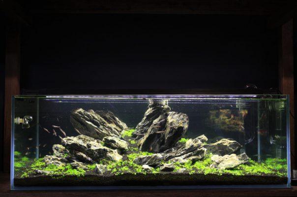 Ивагуми в аквариуме 105 литров