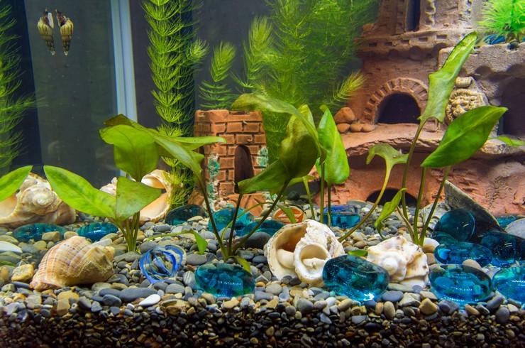 Мелании способны жить практически в любом аквариуме