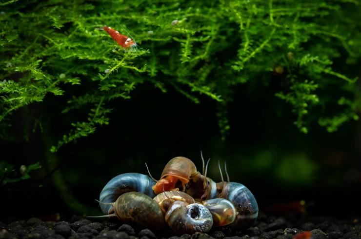 Катушки в аквариуме