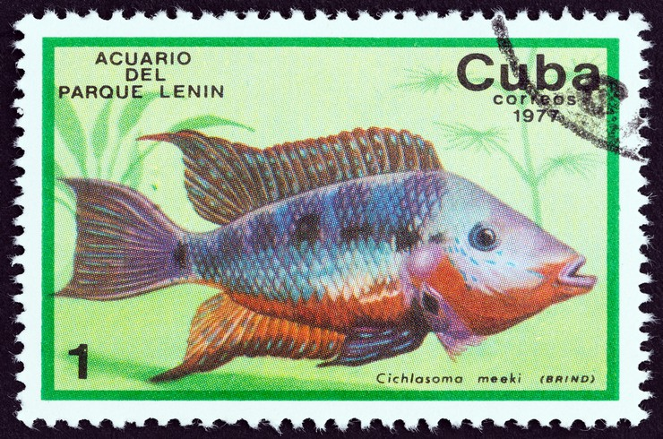 Почтовая марка с изображением цихлиды Меека. Куба, 1977 г.