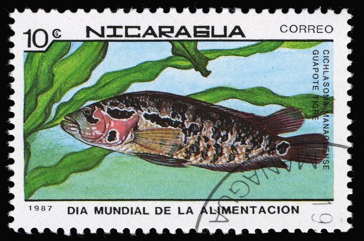 Почтовая марка с изображением манагуанской цихлазомы. Никарагуа, 1987 г.