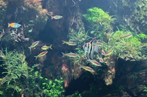 Аквариумные рыбки поражают своим разнообразием