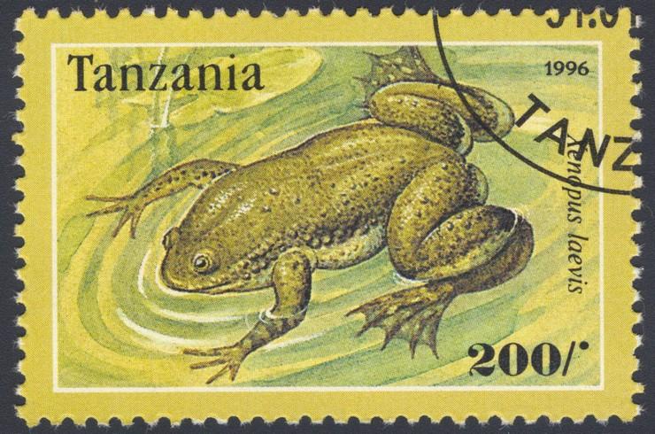 Марка с изображением африканской шпорцевой лягушки. Танзания, 1996 г.