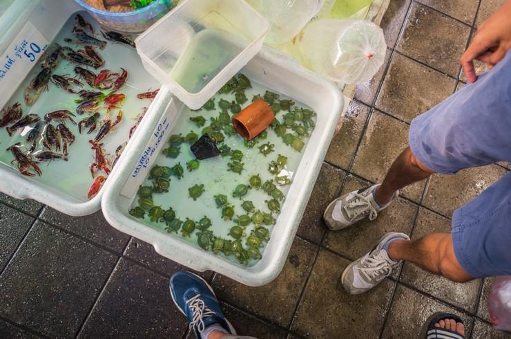 Продажа молодых черепах в Таиланде