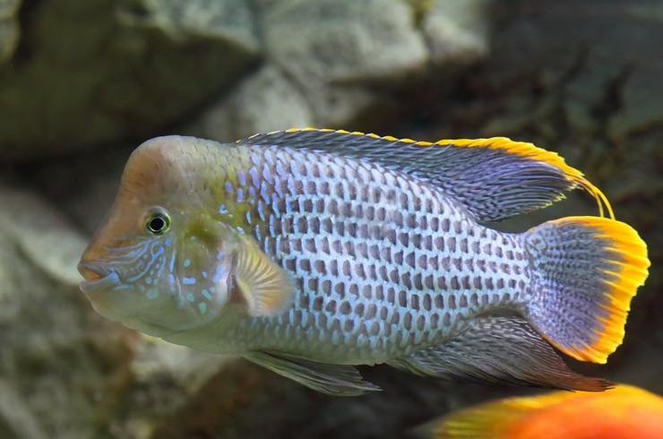 Большие рыбы имеют свой непередаваемый шарм