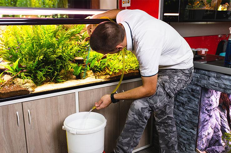 Подмены воды необходимы для поддержания биологического равновесия в аквариуме