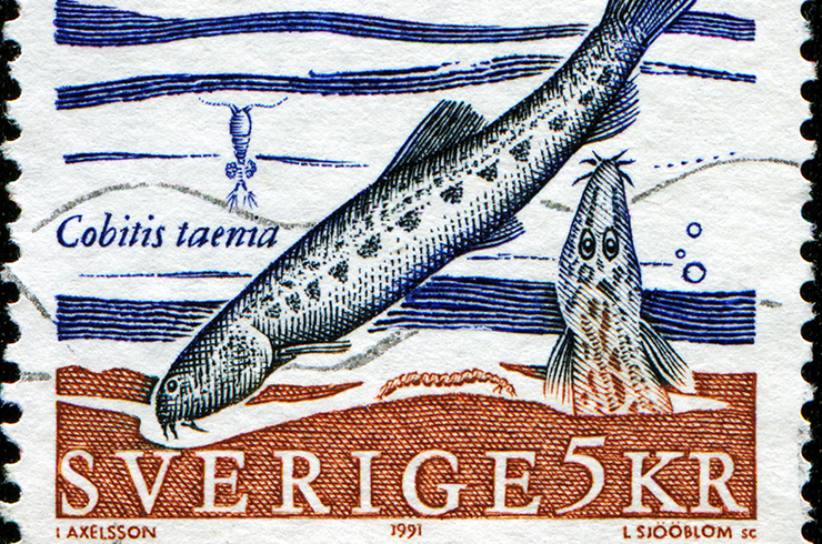 Марка с изображением щиповки. Швеция, 1991 г.