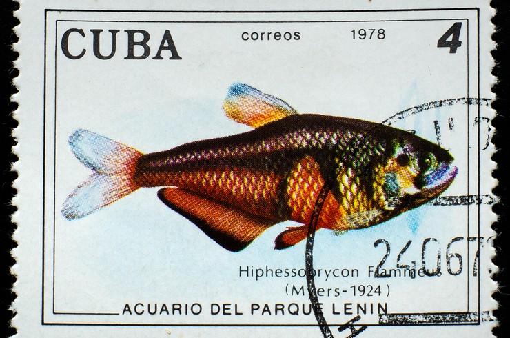 Марка с изображением тетры фон рио. Куба, 1978 г.
