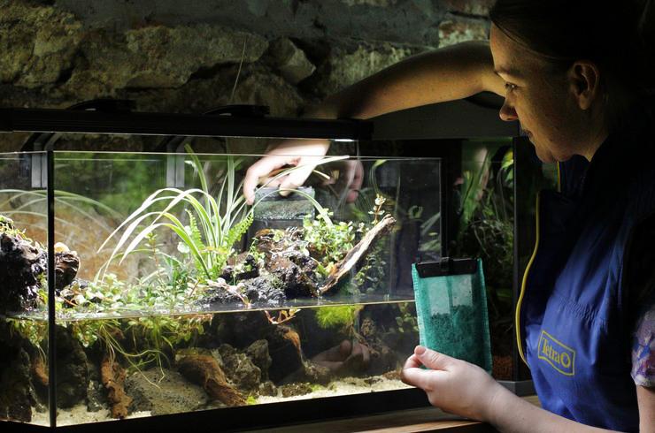 Чистые стекла аквариума позволяют в полной мере насладиться его красотой