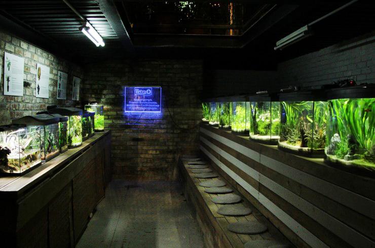 Галерея аквариумов Tetra в «Аптекарском огороде»