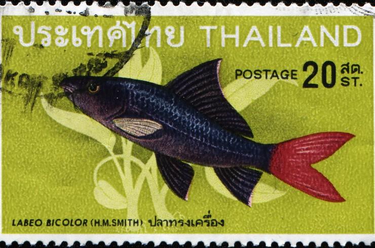 Марка с изображением лабео биколор. Таиланд, 1986 г.