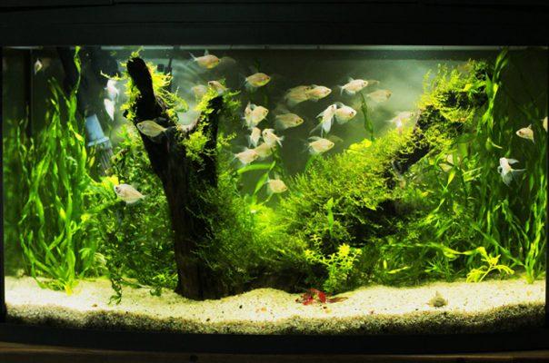 Обслуживание аквариума занимает всего 30-40 минут в неделю
