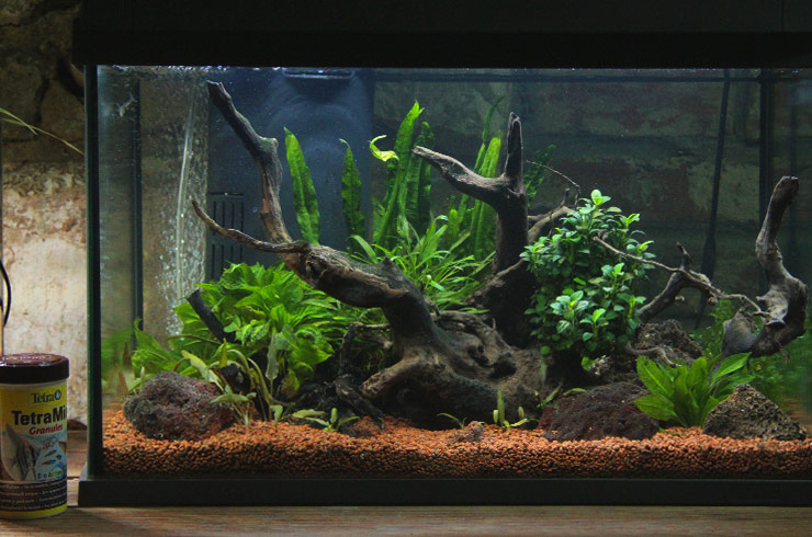 Пример оформления аквариума объемом 60 литров