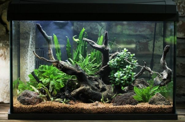 Регулярный уход за аквариумом – залог красоты и комфорта для обитателей