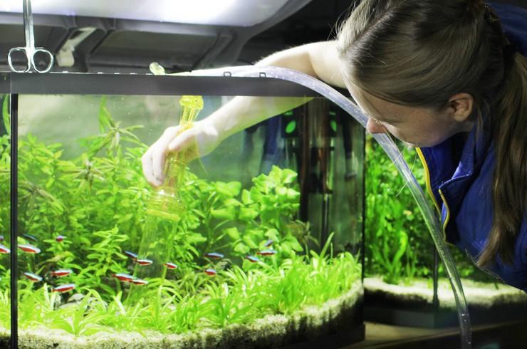С помощью специального сифона происходит подмена воды и очистка грунта