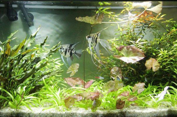 Аквариумы с живыми растениями – самый красивый тип оформления