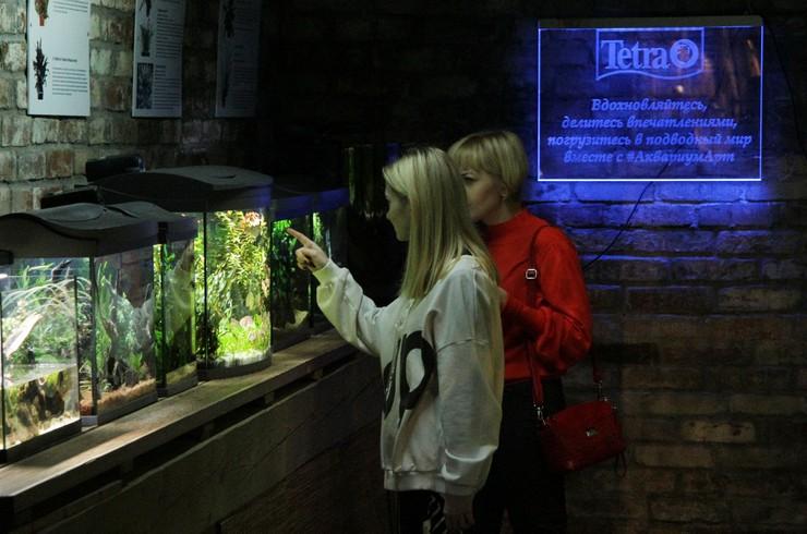 В «Аптекарском огороде» вы можете полюбоваться простыми в уходе аквариумами-травниками