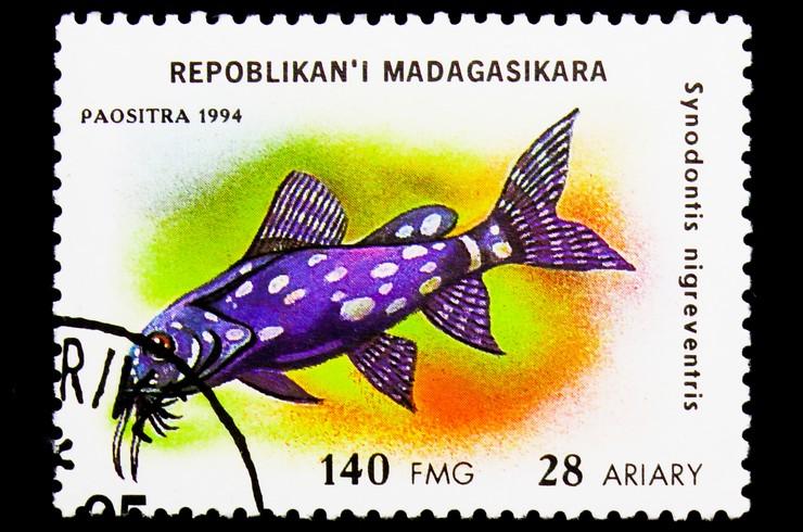 Марка с изображением сомика-перевертыша. Мадагаскар, 1994