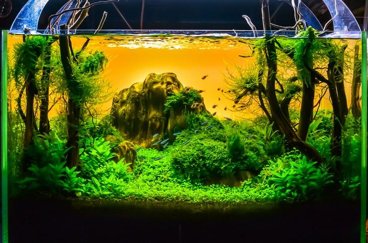 Акваскейп – природный пейзаж в миниатюре