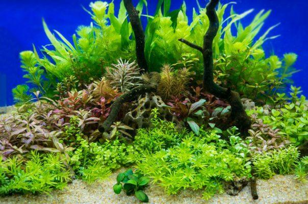 Чтобы сделать красивый аквариум надо следовать нескольким правилам