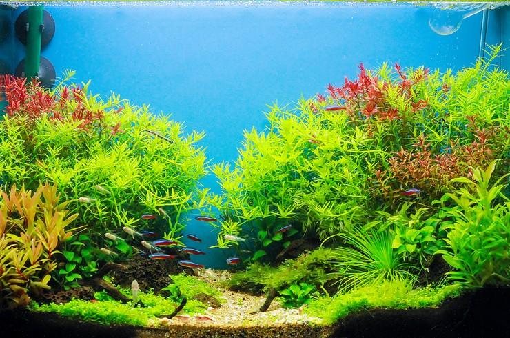 Перспектива в аквариуме придает композиции глубину