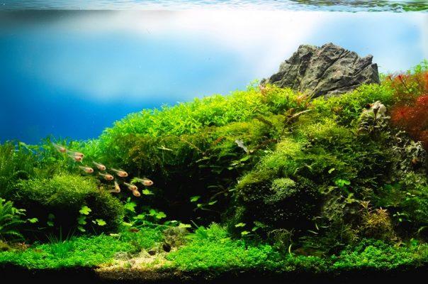 При создании аквариума используют один из стилей оформления
