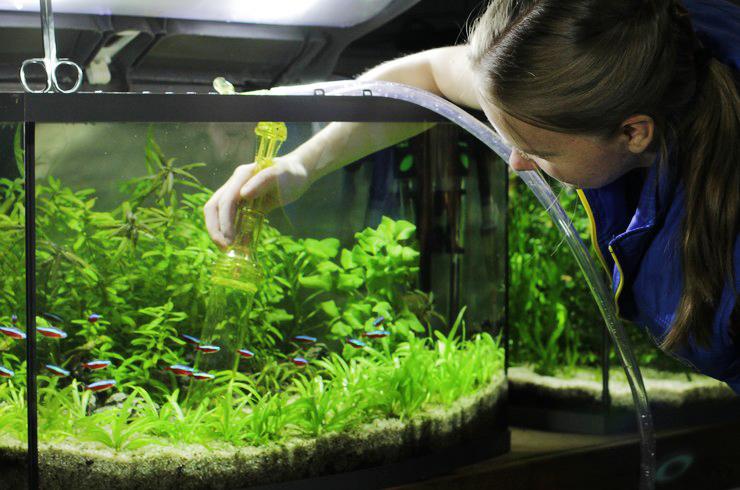 Залог красоты аквариума – регулярное обслуживание