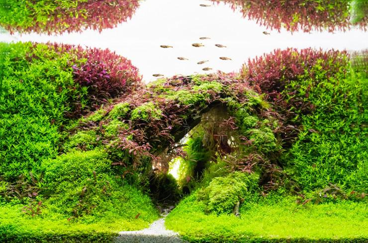 Акваскейп немыслим без живых растений
