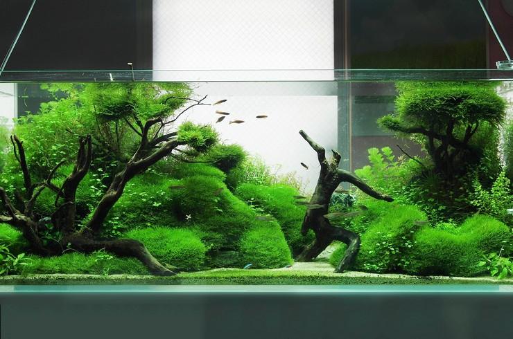 Для акваскейпа лучше всего подходят аквариумы, у которых длина в 2-3 раза больше высоты