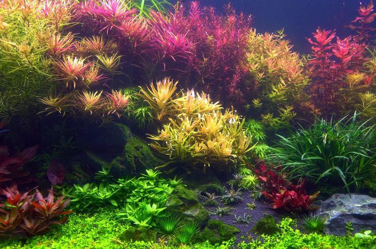 Для создания такого подводного сада придется потрудиться