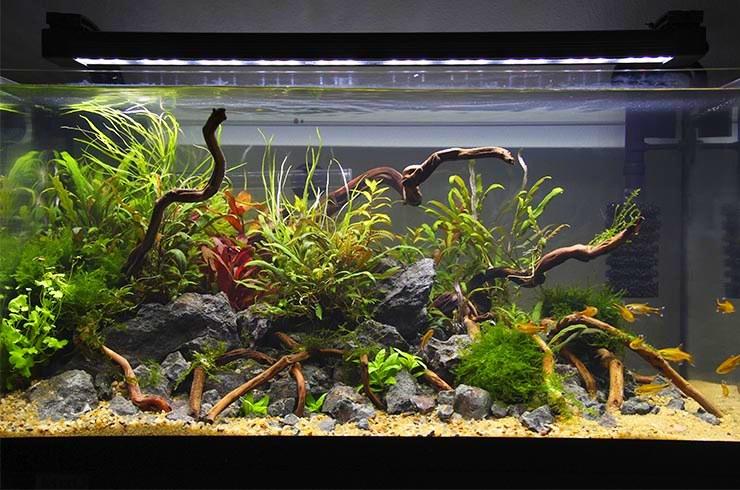 Хорошее освещение способствует росту живых растений