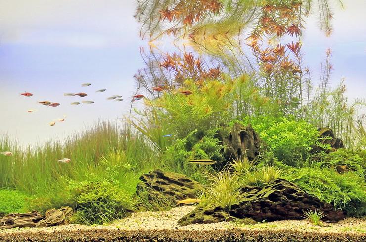 Результат кропотливого труда – прекрасный водный пейзаж