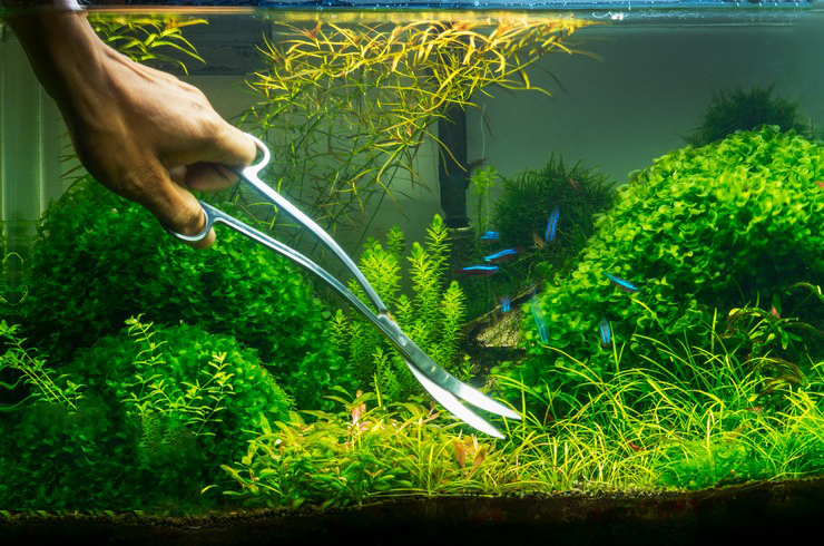 Стрижка растений в акваскейпе