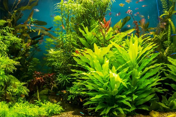 Травник можно создать в аквариуме любого объема