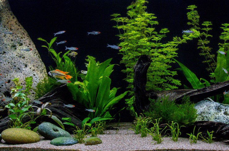 Живые растения отлично сочетаются с натуральными камнями и корягами