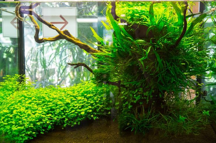 Живым растениям лучше всего подойдет грунт небольшого размера (2-5 мм)