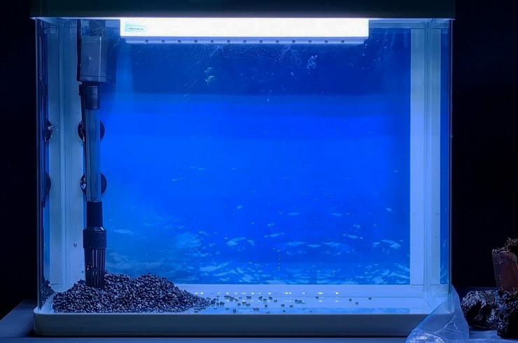 Аквариум объемом 65 литров со встроенным фильтром и штатным светильником
