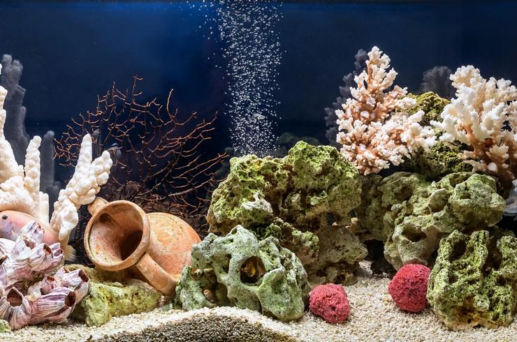 Для создания псевдоморя потребуется большой аквариум
