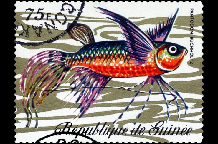 Марка с изображением пантодона. Гвинея, 1971 год