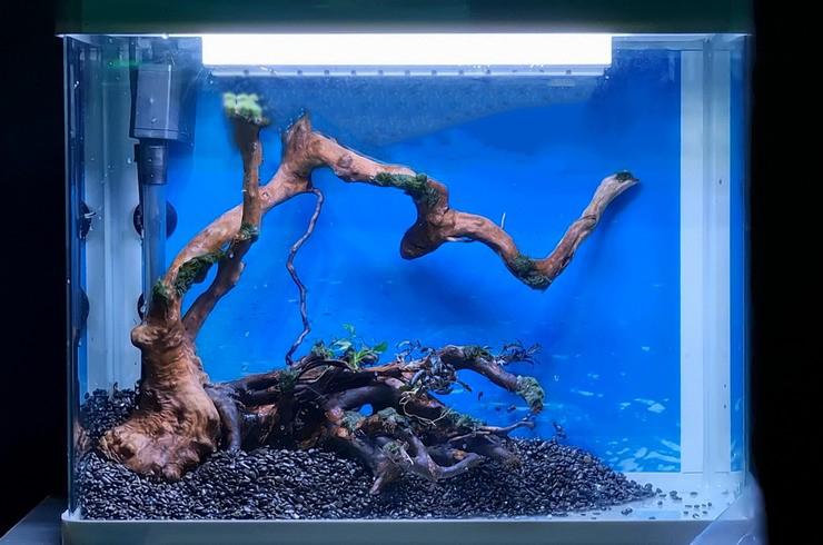 Натуральные коряги имеют причудливые формы и привлекательно смотрятся в аквариуме