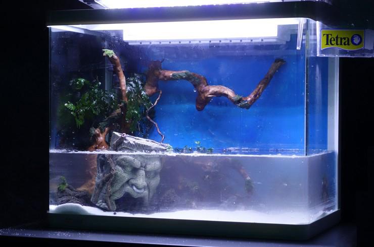 После высадки растений начинаем заполнять аквариум водой