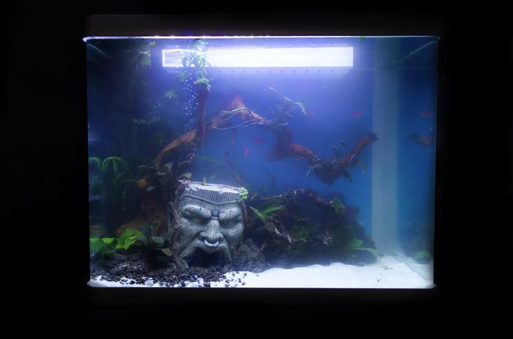 Запуск аквариума завершен!