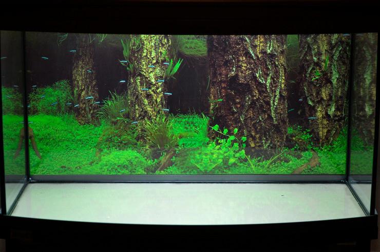 Аквариум объемом 100 литров позволит красиво разместить большое количество аквариумных растений