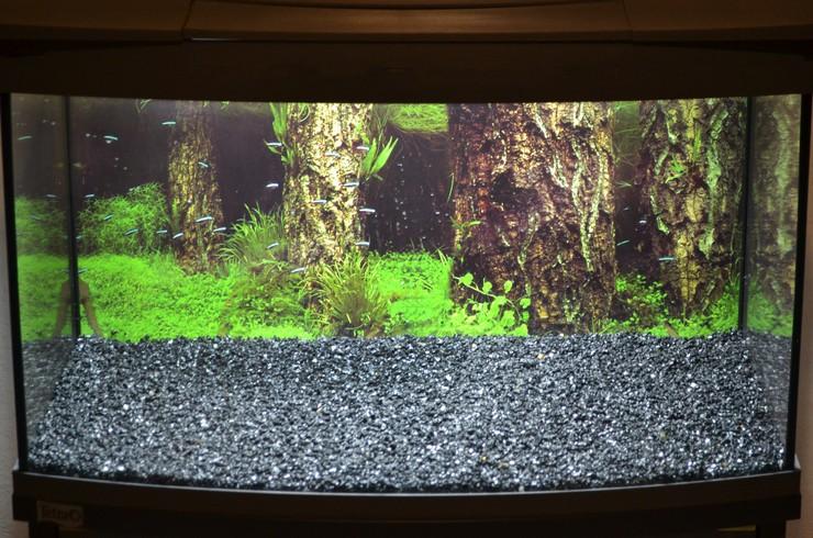 У задней стенки аквариума слой грунта должен быть выше
