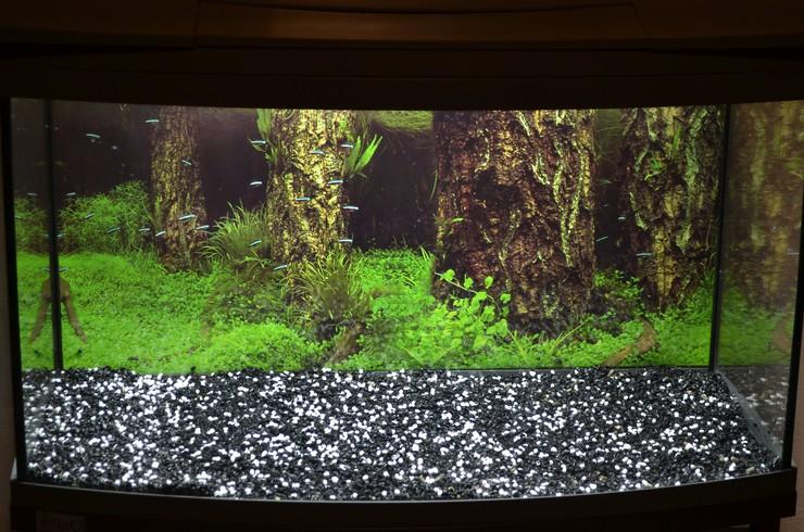 Задача гранул Tetra NitrateMinus Pearl не допустить роста уровня нитратов в воде