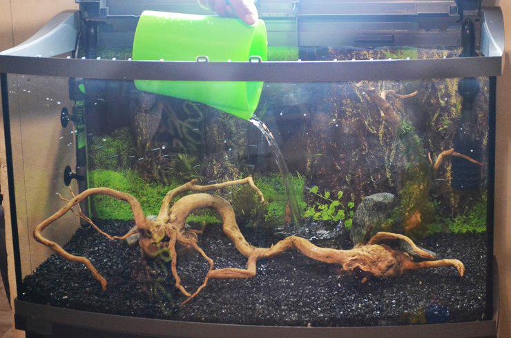 Заливать воду в аквариум следует аккуратно, чтобы не размыть грунт